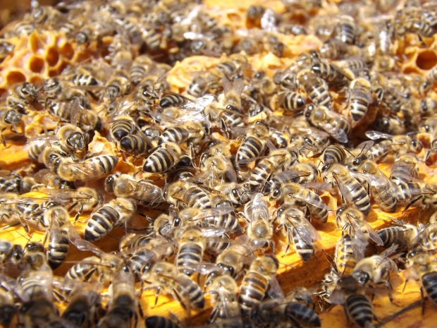 bees-beehive-beekeeping-honey-48022
