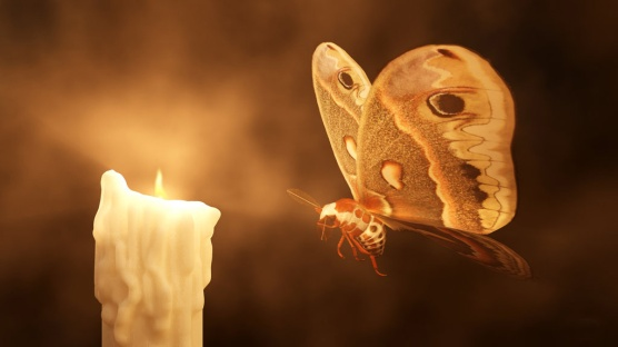 moth_into_flame