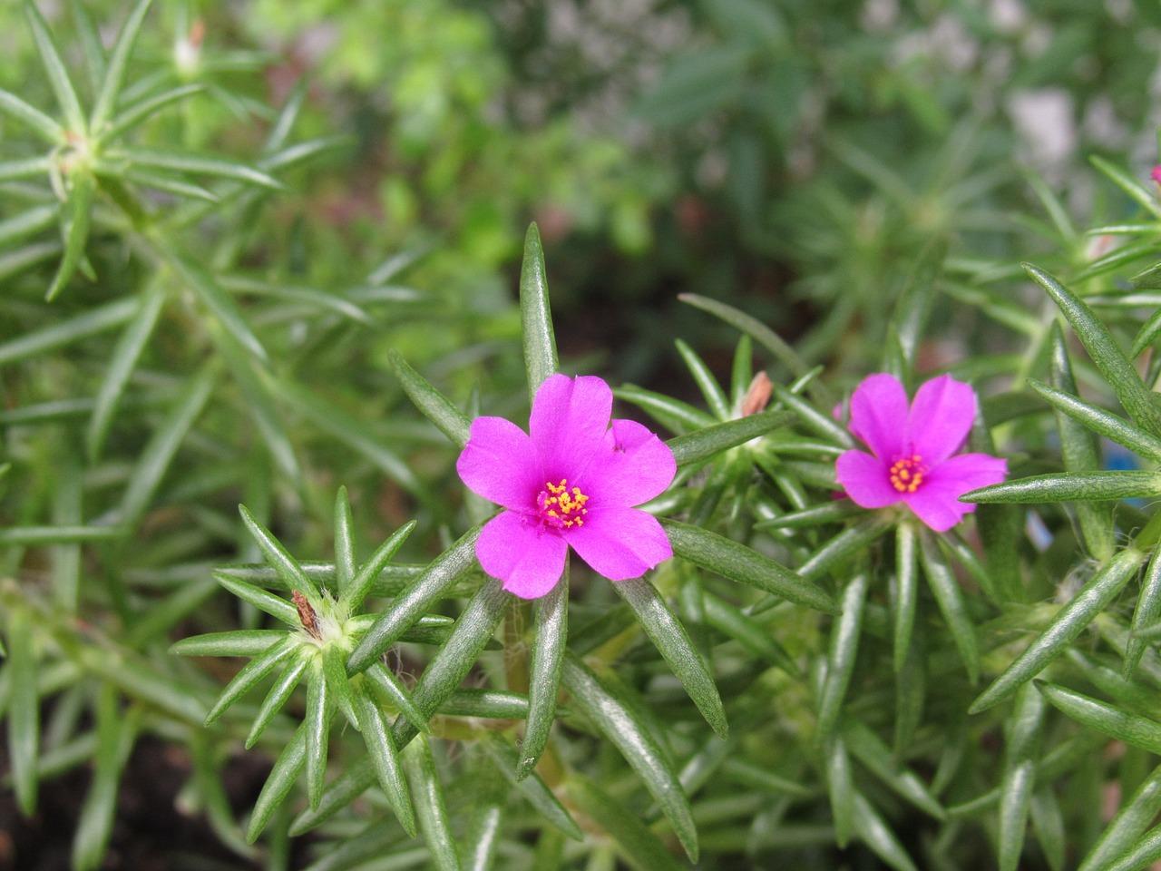 flower-2659902_1280