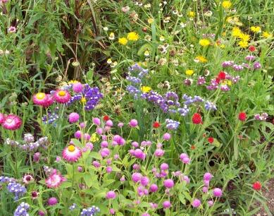 wildflowers-1306096710t2f