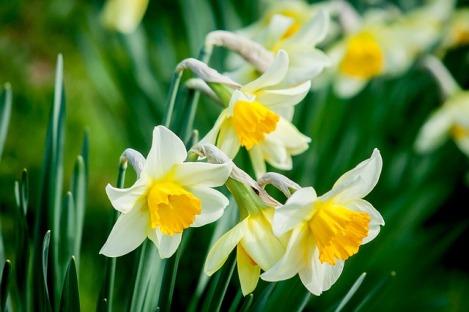 flower-1446420_640
