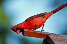 bird-3349832_1280