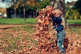 boy-child-dry-leaves-36965