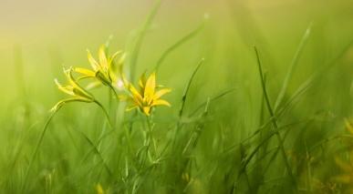 grass-3085457_1280.jpg