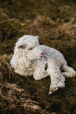 animal-animal-photography-countryside-891607