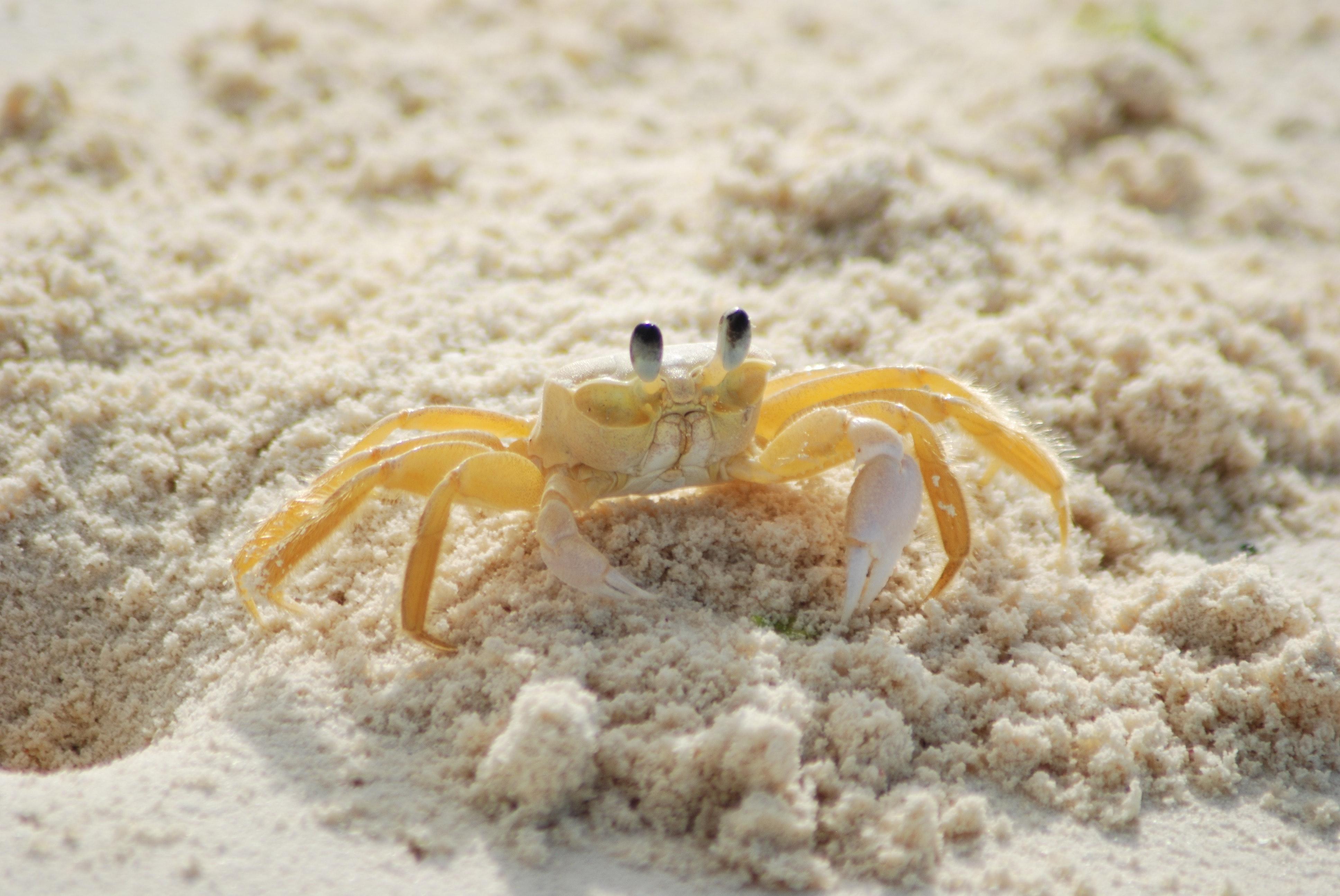 animal-animal-photography-beach-63282.jpg