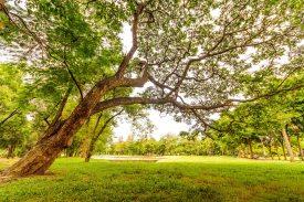 birch-bright-countryside-618608.jpg
