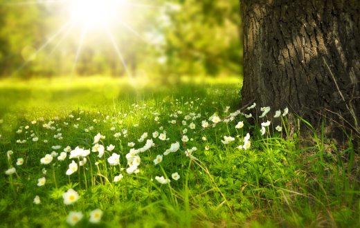 bloom-blossom-flora-60006.jpg