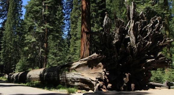 redwood-1798176_1280