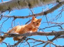 cat-1708658_1920