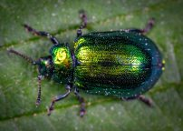 animal-beetle-biology-1114318