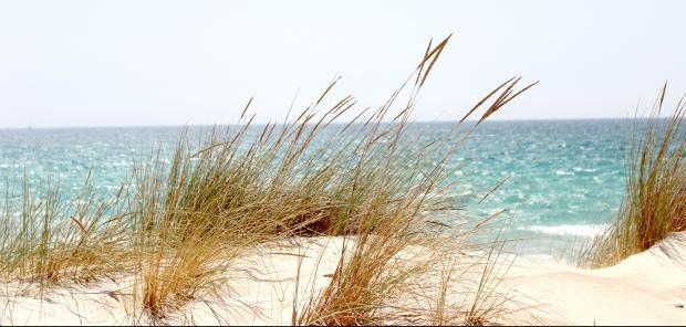 beach-dawn-dune-662994.jpg