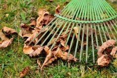 leaves-2901684_1280