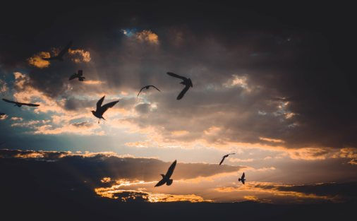 backlit-birds-clouds-721993.jpg
