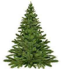 christmas-tree-1792267_1280.jpg