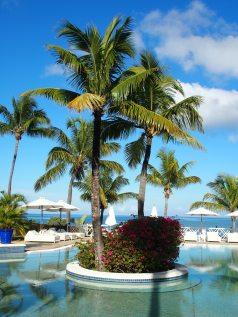 beach-beach-chairs-coconut-trees-261186.jpg