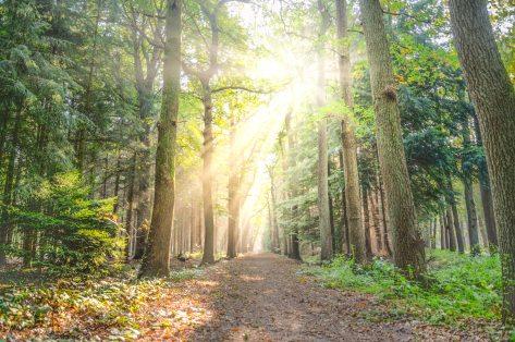 autumn-bright-daylight-615348