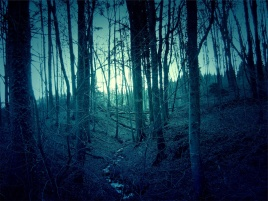 dark-forest-landscape-1.jpg