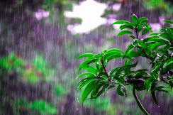bright-environment-flora-1463530.jpg