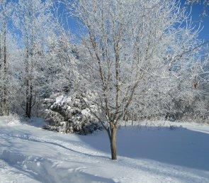 trees-253178_1280