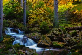timelapse-photography-of-falls-near-trees-707915