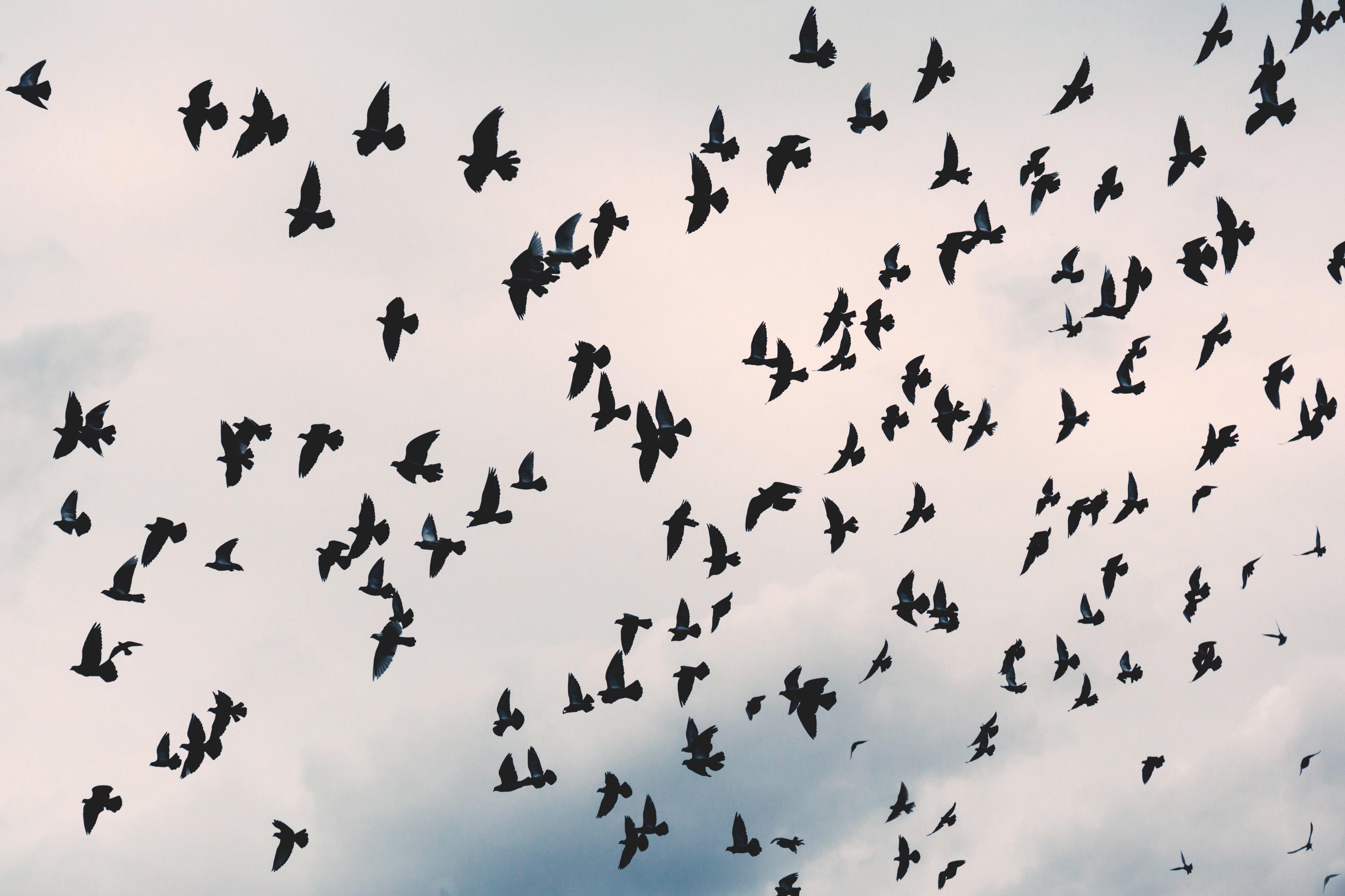 animal-avian-beak-birds-203088