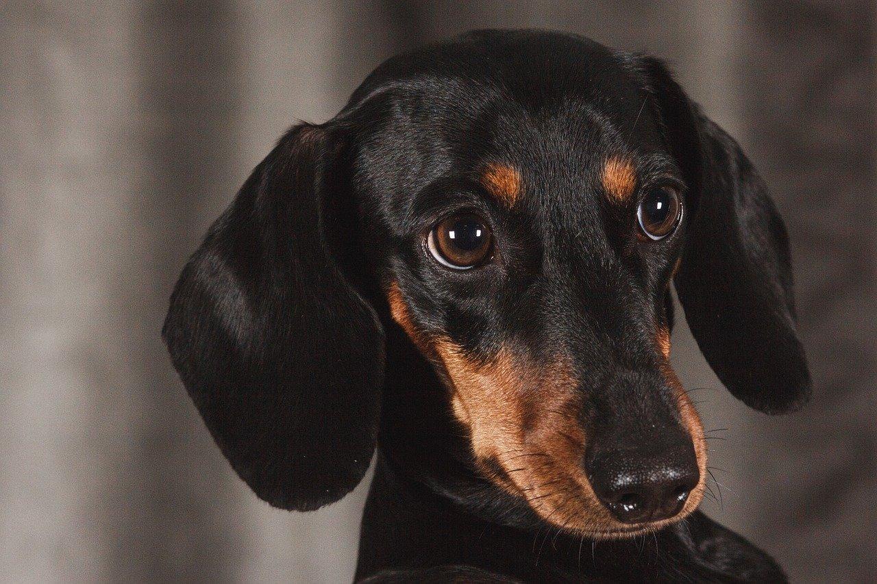 dog-1232449_1280