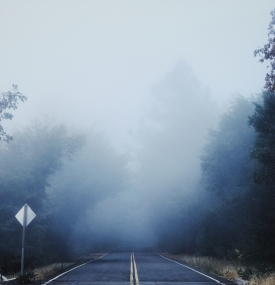 gray-concrete-road-between-trees-covered-with-fog-3808853